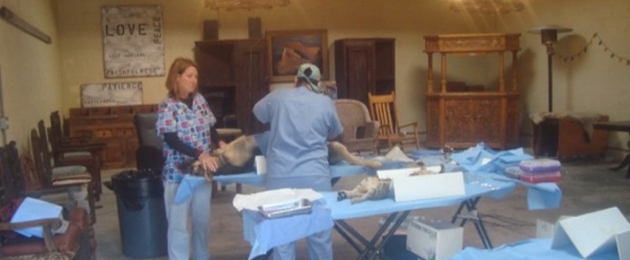Clinic At The Ranch