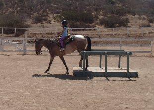 horse-test