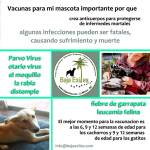 vaccination clinic by baja exiles and VIVA-sown seeds